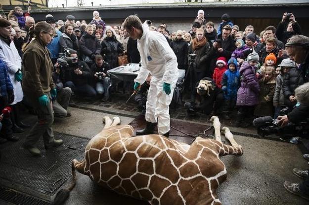 丹麦哥本哈根动物园